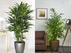 plantas interior - Pesquisa Google