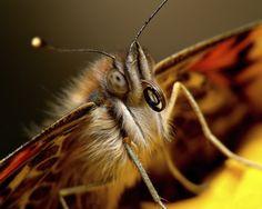 Fritillary butterfly in butterfly garden designed by Brent Knoll of Knoll Landscape Design