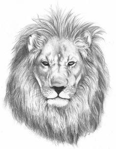 Fake Skin Tattoo, Tatoo 3d, Head Tattoos, Lion Tattoo, Realistic Lion Drawing, Lion Head Drawing, Lion Sketch, Face Sketch, Lion Symbolism