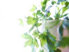 Planta hierbas aromáticas en tu cocina