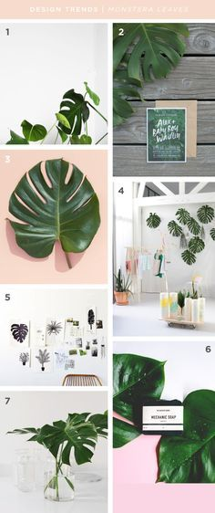 Color palettes | color scheme inspiration | green color scheme | monstera | plants on pink
