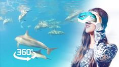 Swim with wild dolphins - a healing Virtual Reality experience - 360ºVR ...