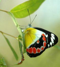 Butterflies  | Flickr - Photo Sharing!