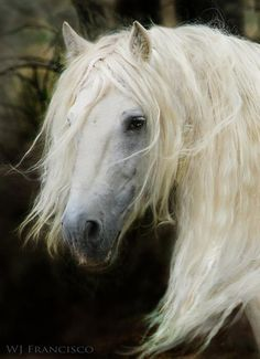 All The Pretty Horses, Beautiful Horses, Animals Beautiful, Equestrian Gifts, Equestrian Outfits, Horse Photos, Horse Pictures, Andalusian Horse, Majestic Horse