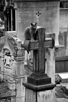 ~ cemetery cat ~