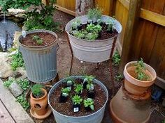 How to grow a pest repellent herb garden <3