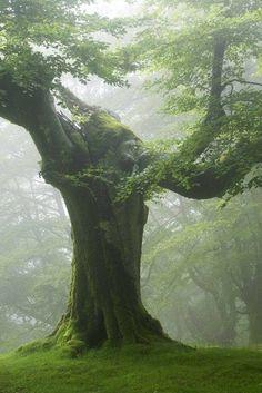 .beautiful ancient tree
