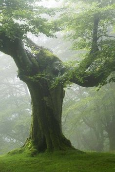 .beautiful ancient tree