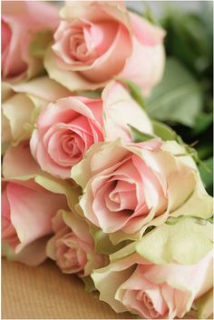 ✿⊱❥ Roses | rosales