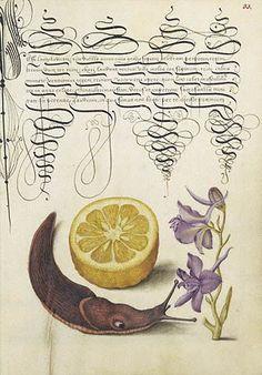 Bocskay: Mira Calligraphiae Monumenta