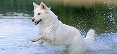 Tutustu ja liity Eukanuban koirakasvattajakerhoon!  Mahdollisuus tilata ilmainen pentupaketti.  http://www.severa.net/#!/component_53793