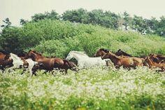 """Wild Horses can't drag me. All The Pretty Horses, Beautiful Horses, Animals Beautiful, Cute Animals, Wild Animals, Horse Love, Horse Girl, Zebras, Mundo Animal"
