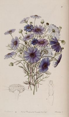 v. 27 (1841) - Edwards's botanical register. - Biodiversity Heritage Library