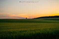 beautiful field Travel Around, Universe, Celestial, Sunset, Nature, Outdoor, Beautiful, Sunsets, Outdoors