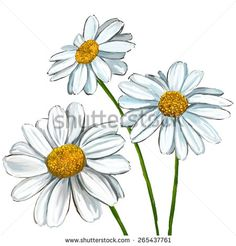 Illustration about Daisy vector illustration hand drawn painted watercolor. Illustration of illustration, country, blooming - 52178045 Daisy Flower Drawing, Daisy Art, Flower Sketches, Drawing Sketches, Flower Art, Art Drawings, Drawing Flowers, Tattoo Flowers, Daisies Tattoo