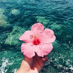 Just the sea breeze and me* summer in 2019 summer pictures, summer wallpape Beach Aesthetic, Flower Aesthetic, Summer Aesthetic, Travel Aesthetic, Summer Pictures, Beach Pictures, Pretty Pictures, Whats Wallpaper, Summer Wallpaper