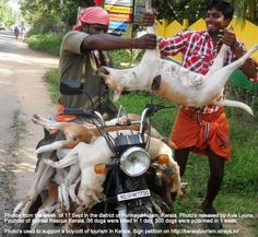 36 dogs were killed in 1 day and 500 poisoned in 1 week in Punnayurkulam, Kerala...Kerala kills 500,000 dogs each year by poisoning them* on its streets to keep itself 'stray dog free', every year from the beginning of tourist reason to the end of it so that the tourist see's the squeaky clean 'God's Own Country' and you part with your money. You can see the footage and reports on last year's massacres and sign the petition to boycott tourism in Kerala http://keralatourism.strays.in/