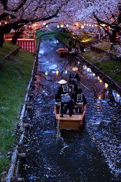 Promenade de nuit sous les cerisiers en fleurs. https://turandoscope.wordpress.com/2016/09/19/18-la-capitale-imperiale-suite/