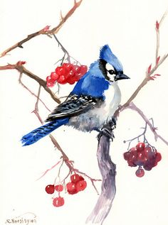 Blue Jay, Original watercolor painting, 12 X 9 in, blue jay and berries, blue red, bird lover art, bird painting