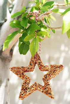 Make bird feeders for outdoor christmas tree with 3/4 cup birdseed 1/4 cup water and a small envelope knox gelatin (use a cookie cutter to make the shape you want)