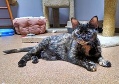 Animal Shelter Volunteer Life: (Almost) Wordless Wednesday - Orphan Annie need a home.
