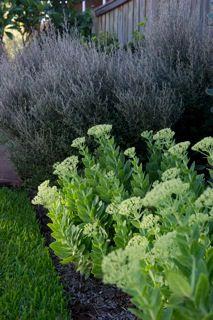 www.naturesvision.com.au North Avoca, Australia Herbs, Ocean, Australia, Gallery, Nature, Plants, Outdoors, House, Naturaleza