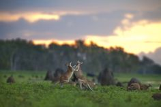 Bamurru Plains is located just to the west of Kakadu National Park on the Mary River floodplains. A profusion of  bird and wildlife are on the doorstep of a unique bush lodge that exudes Wild Bush Luxury and brings a touch of style to a remote and b...