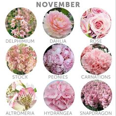 Wedding budget tip 16 choose in season flowers november flower heres a selection of some flower types that are currently in season choosing in season flowers can help you save money on your floral budget junglespirit Images