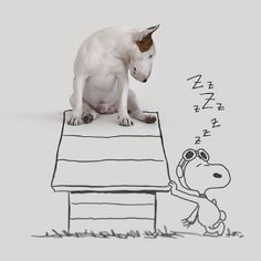 Snoopy Peanuts Dog House // Funny And Cool Dog Drawings & Photo Illustrations, Jimmy Choo Bull Terrier by Rafael Mantesso Perros Bull Terrier, Chien Bull Terrier, Bull Terrier Funny, I Love Dogs, Cute Dogs, Photo Animaliere, English Bull Terriers, Dog Names, Dog Art