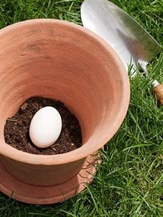 By putting the raw egg (still in the shell) in the pot and then planting your plant on top, the egg will decompose and will act as a natural fertilizer for the plant.