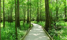 Explore South Carolina's Congaree National Park looking for wood elves and feral pigs - Posted on Roadtrippers.com!