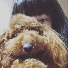 キサが来るまでパッシャンと待っている。親は焼き肉食いに行っている許せん #お腹すいた#なう#愛犬#なう #パッシャン #なう#家#なう#遅い#待っている#お泊まり#dog #toypoodle #red