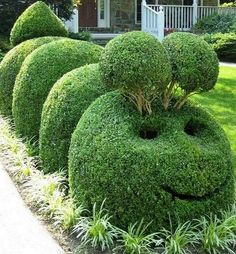 The caterpillar... There's always room for humour in the garden!