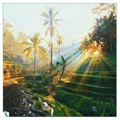 Bali Indonesiaبالیاندونزی Photo by : @jamesrelfdyer Please share your travel photos with us . #backpacking #world #peacful #nature #travel #earth #beautiful #roadtrip #chamedoon #bali #indonesia #wiki #wikieventويكي #ويكي_ايونت #چمدون #بالی #اندونزی