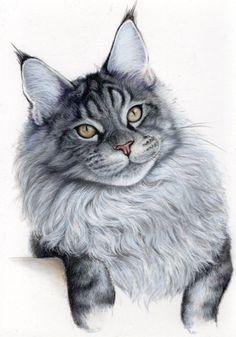Grey cat on white
