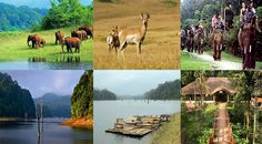 Periyar National Park Book Wildlife Tours Of India With Imperial India Tours