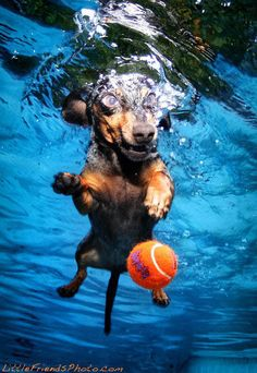 Finding pictures of Dogs fetching their ball underwater is the highlight of my day!