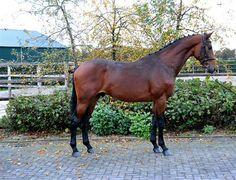Paarden te koop: Jardeaux