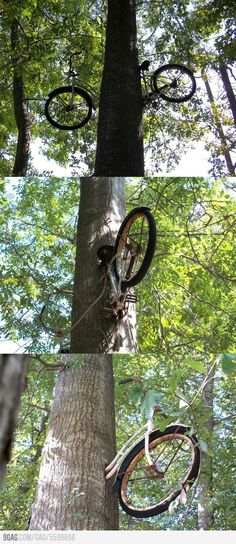 Another pinner said: My father left his bike against this tree 40 years ago.  So awesome!!
