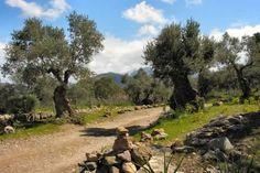 Paths wind across the Muleta Plateau #Mallorca