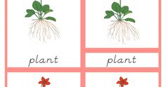 Parts of the Plant Primary Nomenclature Cards (red isolation) d'nealian.pdf