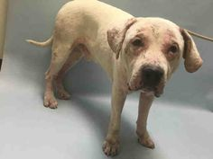 ●7•24•16 STILL THERE●JACKSON - #A1082038 - Urgent Brooklyn - MALE WHITE AM PIT…