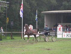 Robbie van Dijk met Dilady II (Statuur x Vilady v. Natuur) tijdens de Ladyhoeve-show in Ermelo bij de uitverkiezing Fokker van het Jaar.
