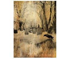 Infrared Photography, Aged Art Image, Surreal, Crow in Graveyard - Gothic Landscape