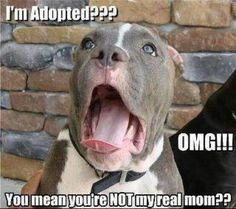 How my dog felt wen I told her she was adopted.