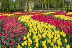 10 jardins colorés autour du monde | CHEZ SOI Photo: ©iStock #jardin #fleurs #couleurs #Keukenhof #PaysBas