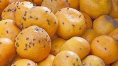 Octomilky osidlují naše kuchyně a člověk neví, jak by se jich jinak než tleskáním zbavil. Máme ozkoušené rady ikonkrétní recepty na lapače. Interior Design Living Room, Good To Know, Diy And Crafts, Good Things, Orange, Fruit, Tips, Food, Decor Ideas