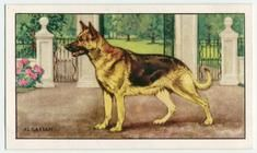 """Search results - """"dog"""" - NYPL Digital Collections"""