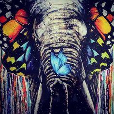 ButterSky & Elephant ... #butterfly #elephant #colors #like #likeit #like4like #likeforlike #like4follow #likeforfollow #likeforfub #o #orange #orangeisthenewblack #picoftheday #pictureoftheday #syr #syrphoto #josesanchoyrivas