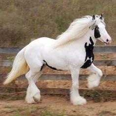 Beautiful horse. stable-mates.com
